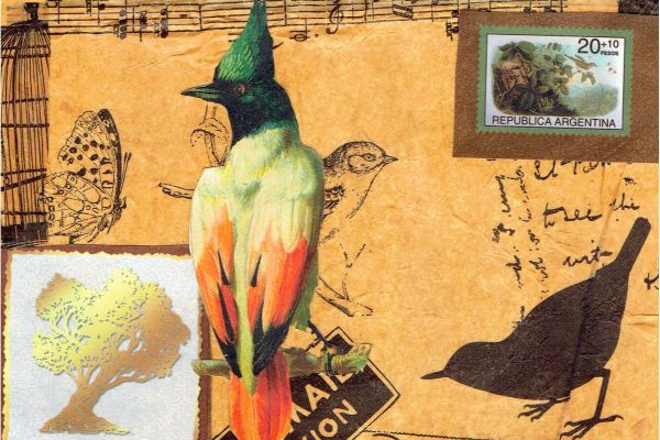 collage birds postcard16x4